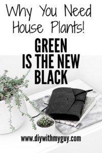 Aesthetic Indoor Plant benefits