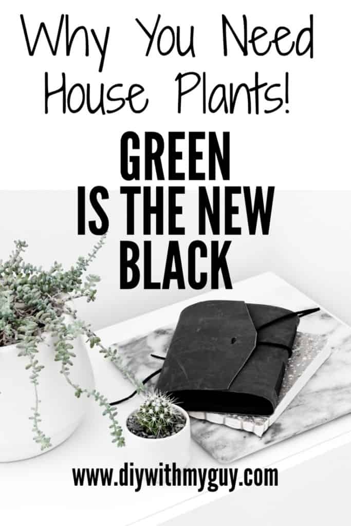 Aesthetic Indoor Plant benefits